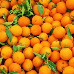 Oranges 4 pièces