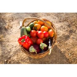 Le panier de légumes du soleil