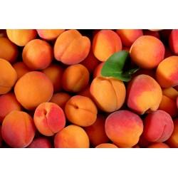 Abricots du Roussillon x 10...