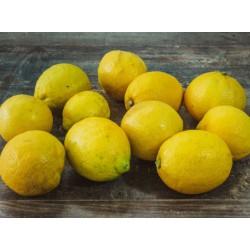 Citron jaune x3
