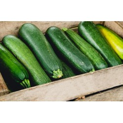 Courgettes x 2 Loiretaines