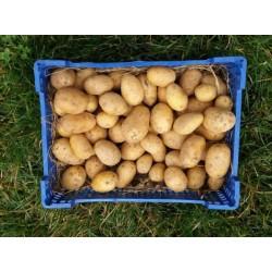 Pommes De Terre Annabelle du Loiret 5kg