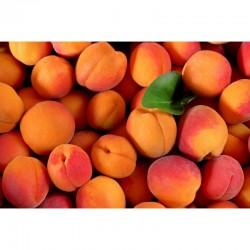 Abricots Français x 10 pièces