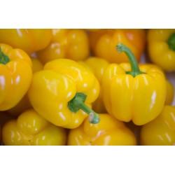 Poivron jaune 1 pièce