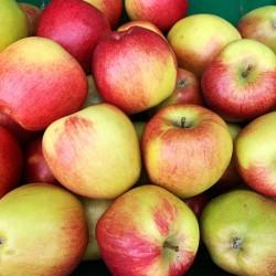 Pommes Braeburn Loiret 1kg