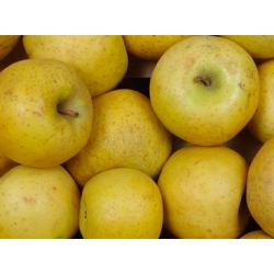 Pommes Chantecler -...