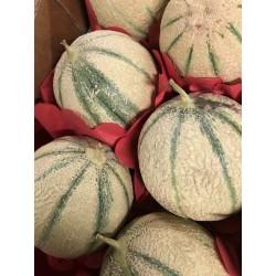 Melon 1 pièce