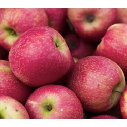 Pommes 1kg